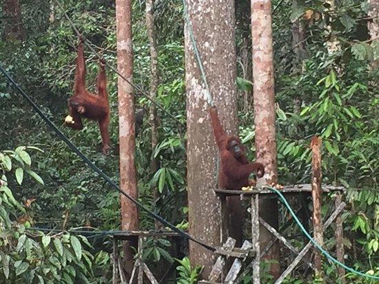 Semenggoh Nature Reserve: photo1.jpg