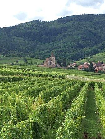 Route des vins d'Alsace: el viñedo