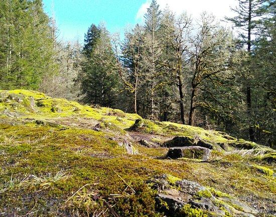 Camas, WA: On the trails