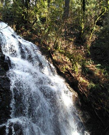 Camas, WA: Lower Falls
