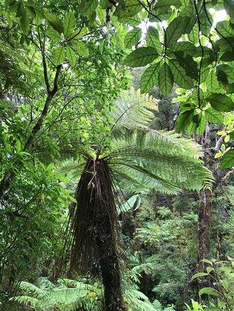 Karamea, New Zealand: photo0.jpg