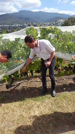 Moorilla Estate Winery: FB_IMG_1489469688625_large.jpg