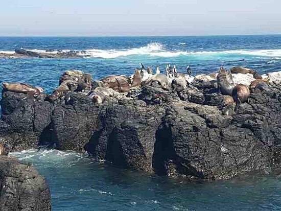 Cowes, Australia: Wildlife Coast Cruises