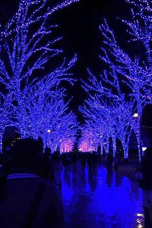 Photo of Park Yoyogi Park at 代々木神園町2-1, Shibuya 151-0052, Japan