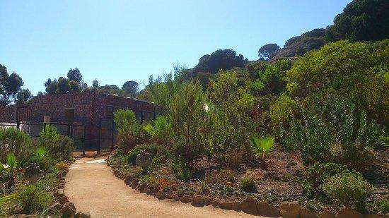 بارل, جنوب أفريقيا: Garden of fynbos, olive trees, lemon trees and natural flowers.