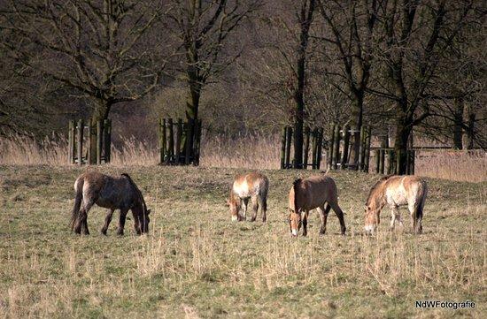 Photo of Zoo Natuurpark Lelystad at Vlotgrasweg 11, Lelystad 8219 PP, Netherlands
