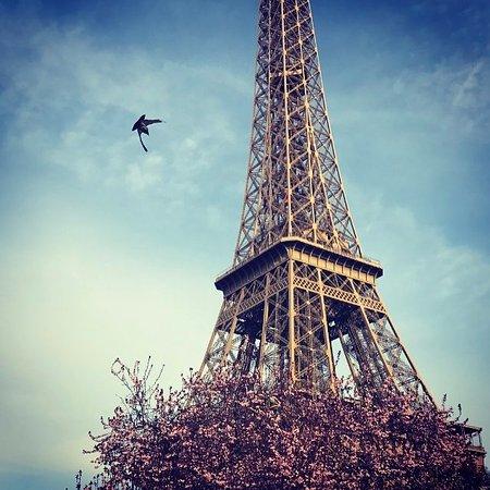 Europe Hotel Paris: Spring is here.......