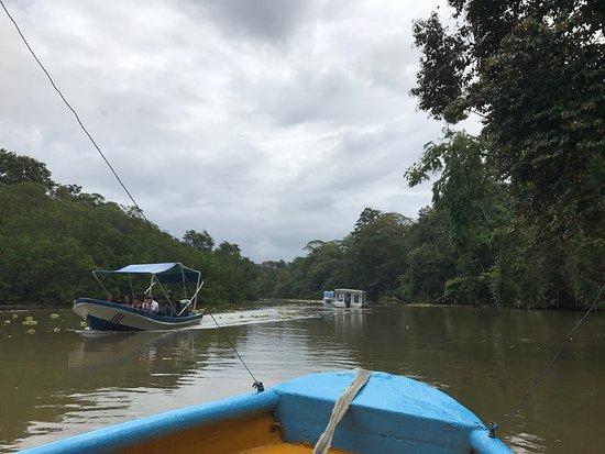 Тортугеро, Коста-Рика: photo0.jpg