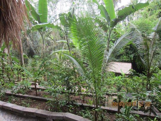 Lodtunduh, Indonesien: Part of the plantation area