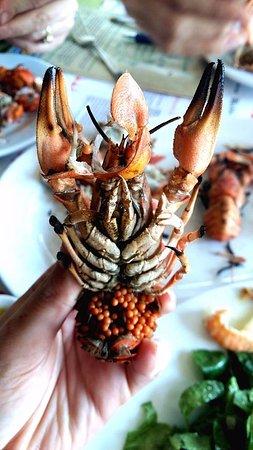 Tsipouradiko Santorinis : crayfish cramb