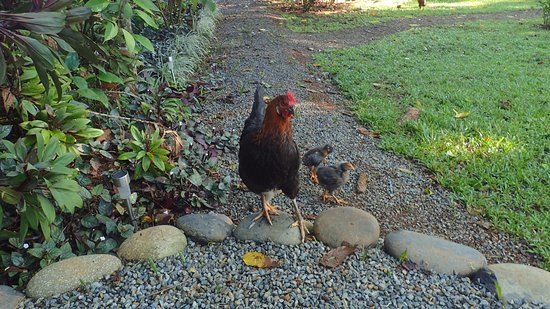 Bali Rica Casitas: Mommy and her babies - so cute to watch