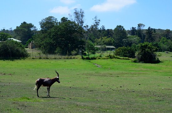 Sidbury, South Africa: just outside hotel ground