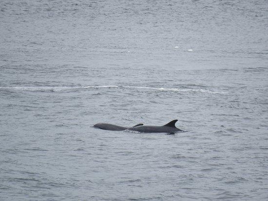 Ardersier, UK: Golfinhos!