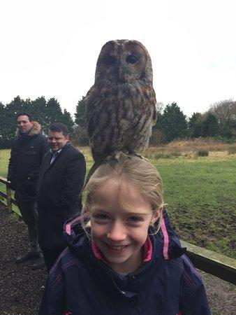 Preston, UK: Owl on Head!!