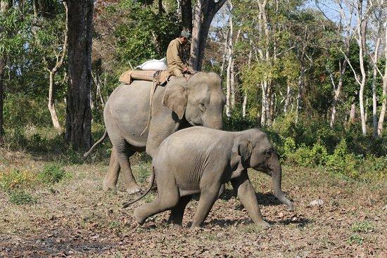 Bilde fra Nameri National Park