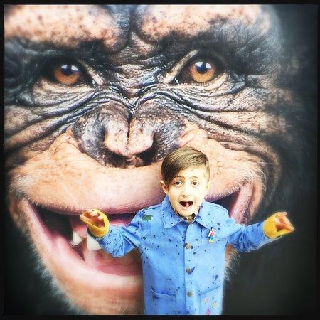 Antwerp Zoo (Dierentuin): photo1.jpg