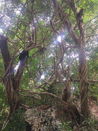 Andromeda Botanic Gardens: Amazing Forest