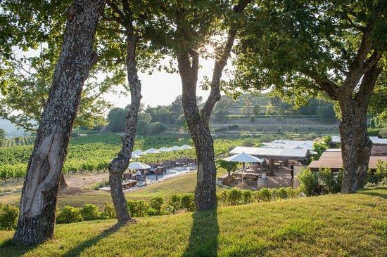 Гарга, Франция: Le Jardin dans les vignes