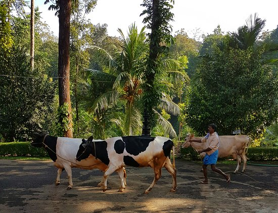 Karimannoor, India: Life on the farm...