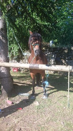 Calvignac, France: 私がお世話になった馬