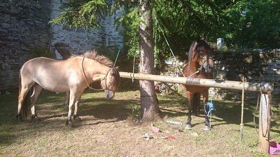 Calvignac, France: 待機中の馬たち