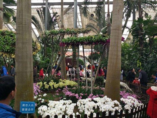 Botanical Garden of Chinese Academy of Sciences: photo1.jpg