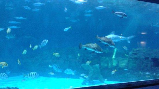 Manteo, NC: Aquarium