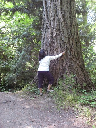 Denman Island, Canada: Some nice old growth fir in the park.