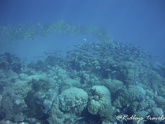 Abyss Plongee: Lots of marne life along the barrier reef outside Noumea