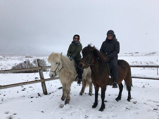 Skagafjordur, Iceland: Horse tours at Langhus farm