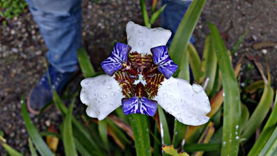 Hermosos jardines, con flores magnificas - Picture of The Plantation ...