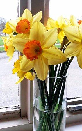 Cavendish, UK: spring time