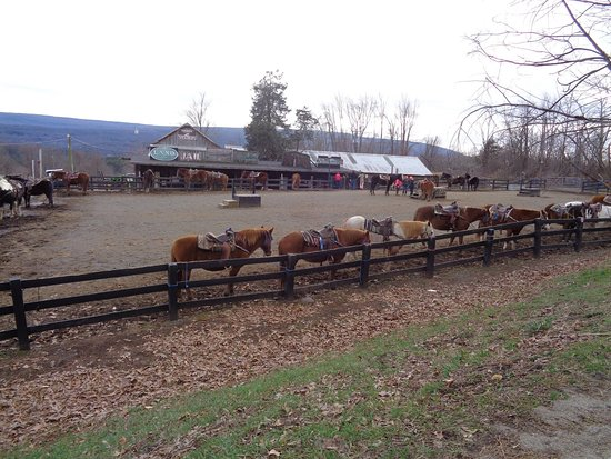 Pinegrove Family Dude Ranch: The horses before they take the guests out for a ride!