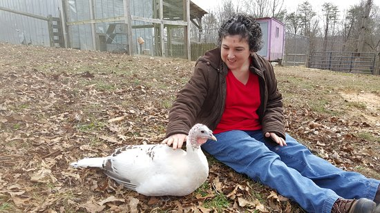 Ridgeway, Wirginia: Really? Petting a TURKEY??