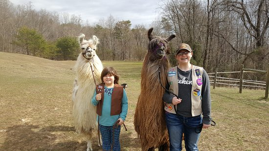 Ridgeway, VA: Girl Scouts learning to hike with llamas