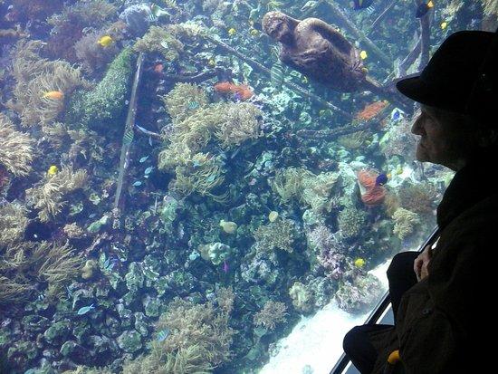 Antwerp Zoo (Dierentuin): Spectaculair rif aquarium in Zoo van Antwerpen