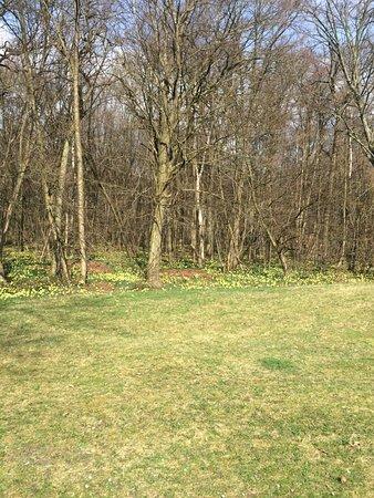Ile-de-France, Francia: Les sous bois en mars