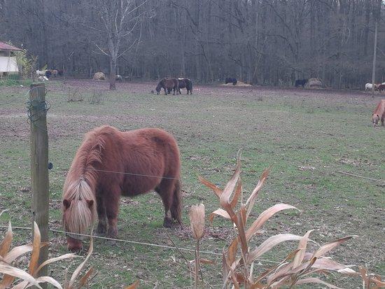 Poney-Club - Centre Equestre de Rambouillet: Wawwww