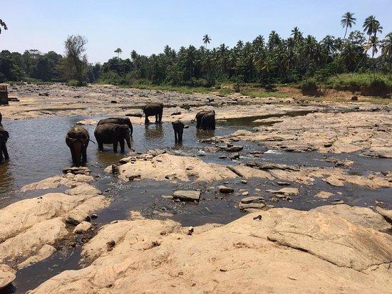 Kegalle, Sri Lanka: Pinnawala Jumbos