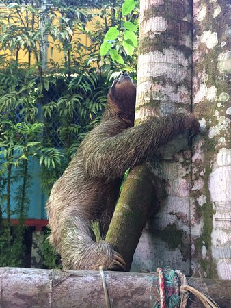 Yare Hotel : Sloth on the property