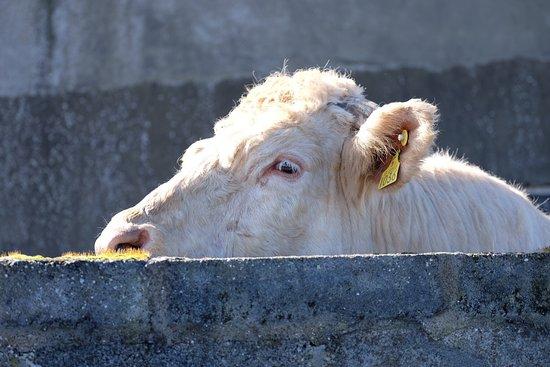 Lahinch, Ireland: photo1.jpg