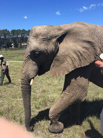 Knysna Elephant Park: photo4.jpg
