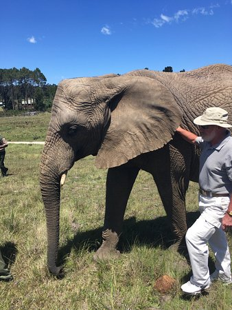 Knysna Elephant Park: photo5.jpg