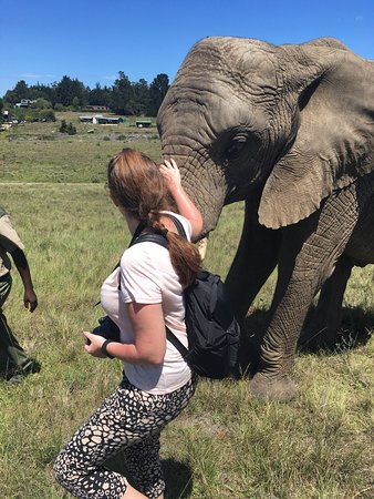 Knysna Elephant Park: photo6.jpg