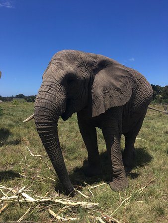 Knysna Elephant Park: photo7.jpg