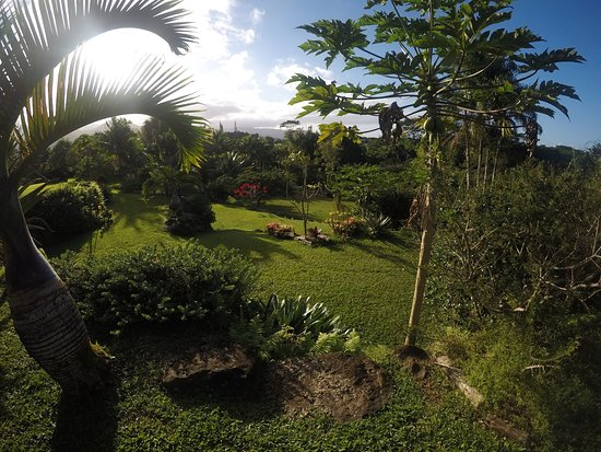 Princeville Botanical Gardens   All You Need To Know Before You Go (with  Photos)   TripAdvisor