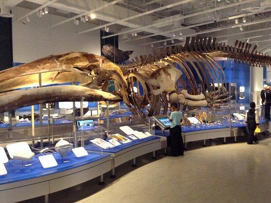 Ottawa, Kanada: Canadian Museum of Nature - March 2017