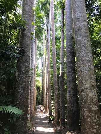 Mena Creek, ออสเตรเลีย: photo1.jpg