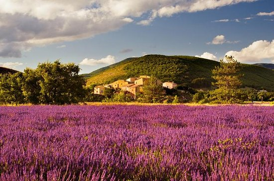 Small-group Lavender Fields Tour from...