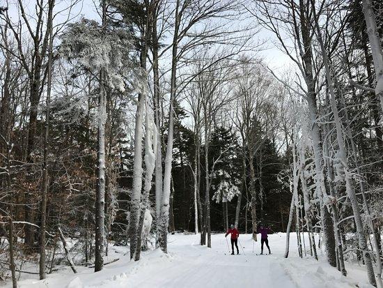 Ripton, VT: pretty trails, happy friends